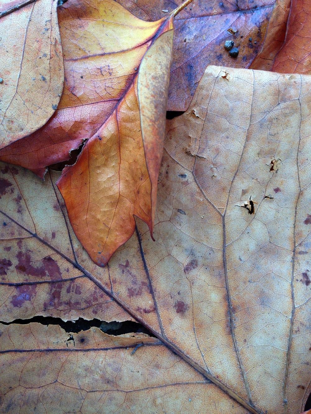 Autumn Ground Cover 2 - Alice Becker